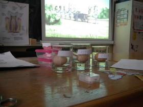 promovare-educatie-igiena-orala-scoli-copii (3)